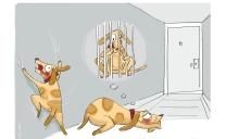 Campanya #femveïnatge Dia 6. Gossos